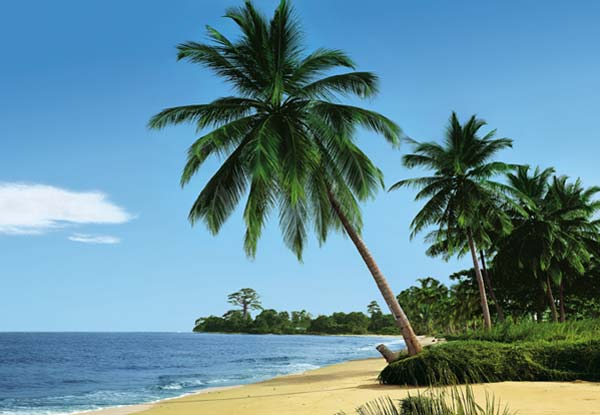 Tropical scene murals wall murals to for Beach scene mural